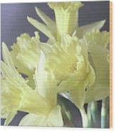 Fragile Daffodils Wood Print