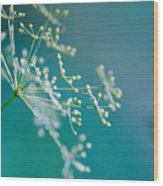 Fragile Dill Umbels Wood Print