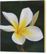 Fragrant Hawaiian Plumeria Maui Wood Print