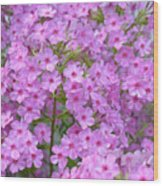 Fragrant Phlox Wood Print