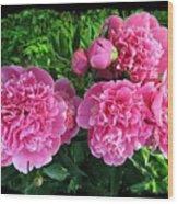 Fragrant Pink Peonies Wood Print