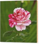 Fragrant Pink Wood Print