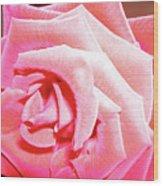 Fragrant Rose Wood Print