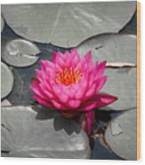 Fragrant Water Lily Wood Print