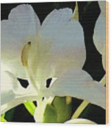 Fragrant White Ginger Wood Print