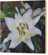 Fragrant White Lily Wood Print