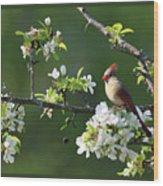Framed Cardinals In Spring Wood Print