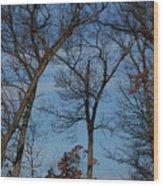 Framed In Oak - 1 Wood Print