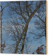 Framed In Oak - 2 Wood Print