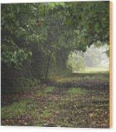 Framed Summer Woods Wood Print