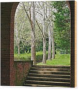 Framed Sycamores Wood Print