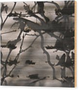 France, Paris, Tree Branches Reflected Wood Print