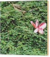 Frangipani Flower Wood Print