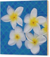Frangipani Flowers In Water Wood Print