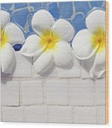 Frangipani Flowers Wood Print by Laura Leyshon