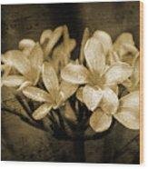 Frangipani In Sepia Wood Print