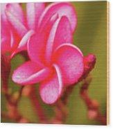 Pink Frangipani Plumeria Flowers Wood Print