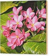 Frangipanis In Bloom Wood Print