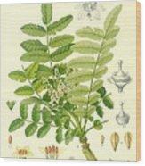 Frankincense Wood Print