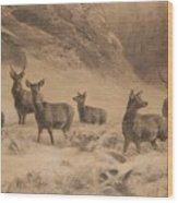 Franz Xaver Von Pausinger Rotwild Im Winter Wood Print