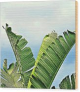 Frayed Palm Fronds Against Blue Sky Wood Print