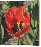 Frayed Tulip Wood Print