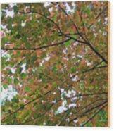 Free Fall Wood Print