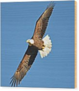 Free Flying Wood Print