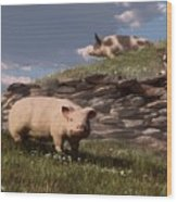 Free Range Pigs Wood Print
