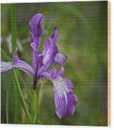 Free Ranging Wild Iris Wood Print