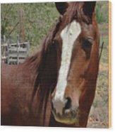 Freedom Horse Wood Print