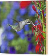 Freedom Hummingbird Wood Print