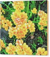 Freesias Wood Print