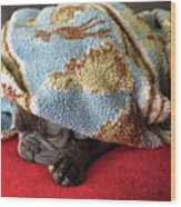 French Bulldog Naps Under A Blanket-1 Wood Print
