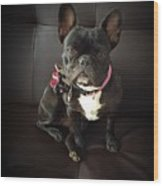 French Bulldog On The Couch Wood Print