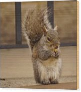 French Fry Eating Squirrel Wood Print