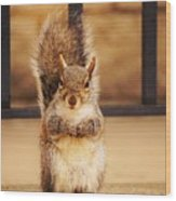 French Fry Eating Squirrel2 Wood Print