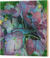 French Hydrangea Rainbow Wood Print
