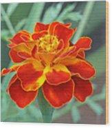 French Marigold Wood Print