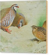 French Partridge By Thorburn Wood Print