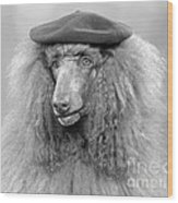 French Poodle Wearing Beret, C.1970s Wood Print