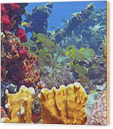 French Reef 1 Wood Print