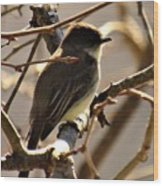 Frenchbroad Flycatcher Wood Print
