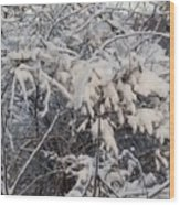 Fresh Coat Of Snow Wood Print
