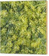 Fresh Dill Weed  Wood Print