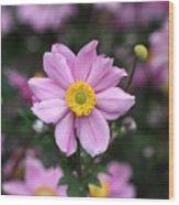 Fresh Field Flowers Wood Print