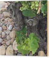 Fresh Grapes Wood Print