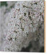 Fresh Lilac Perfume Wood Print
