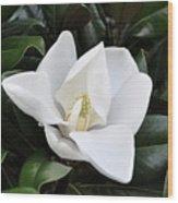 Fresh Magnolia Wood Print
