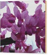 Fresh Redbud Blooms Wood Print